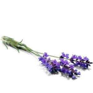 Lavender Dark Balsamic Vinegar